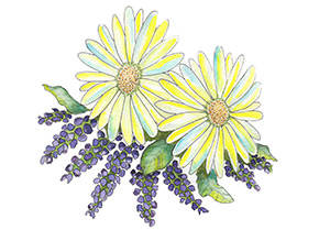 Piping Rock Lavender Chamomile Fragrance Oil